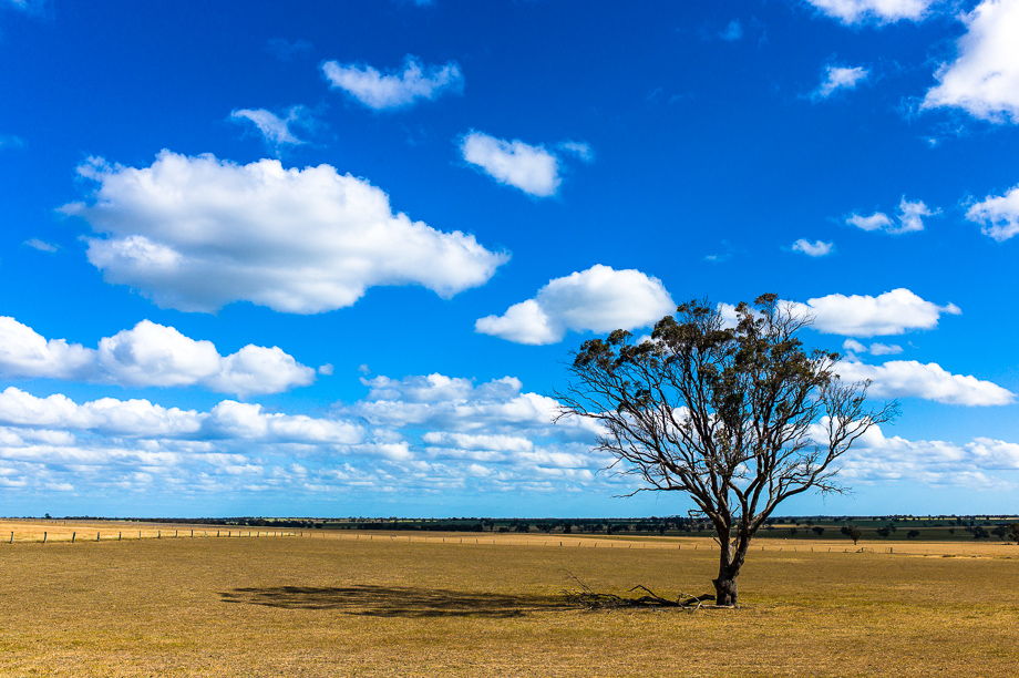 South Australia, Landscape, Tree, Leica, Jamie Chan, No Foreign Lands, travel blogger