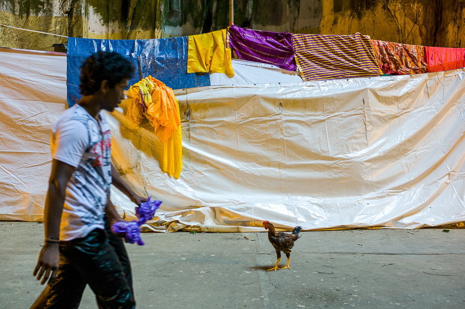 chicken, Thaipusam, 2015, Malaysia, Leica, Summilux, Jamie Chan, No Foreign Lands, Travel