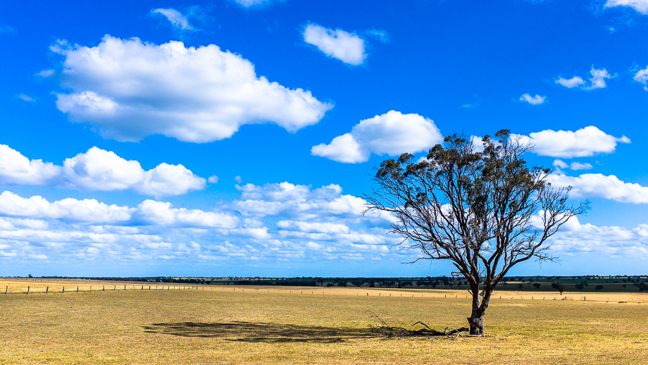 landscape, australia, leica, Jamie Chan, No Foreign Lands, Photographer, land, lonely tree
